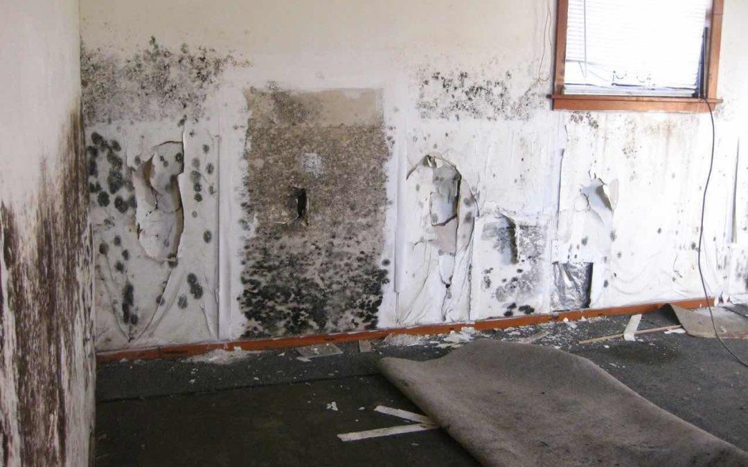 Black Mold Long Beach Mold Remediation Company